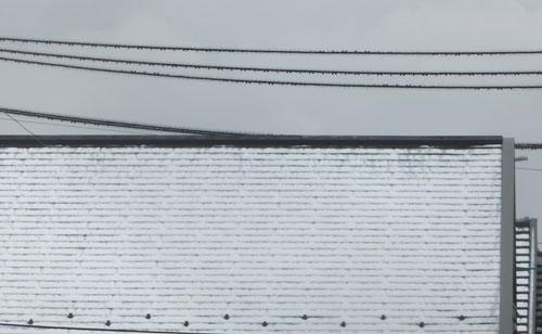 雪やね_ganbatte-ferrari